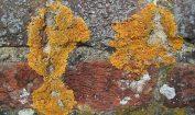 Facts about Lichen