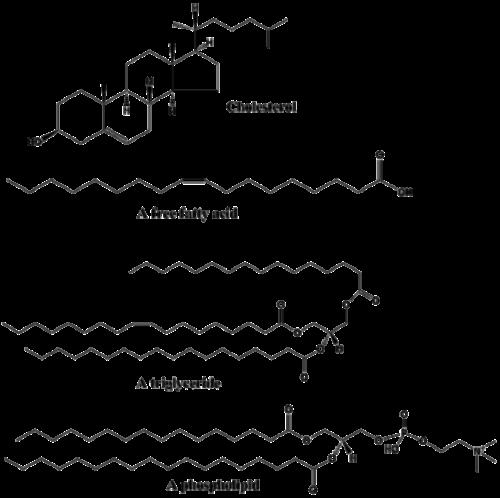 Lipids Facts