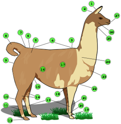 Llama Body