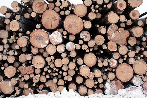 Facts about Logging
