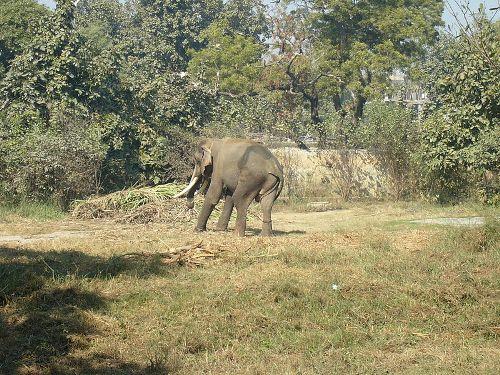 Lucknow Fauna