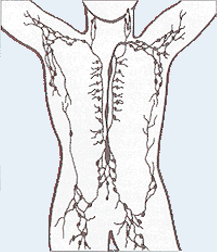 Facts about Lymphatic System