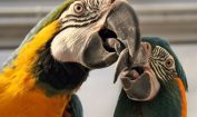 Facts about Macaws