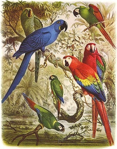 Macaws Pictures