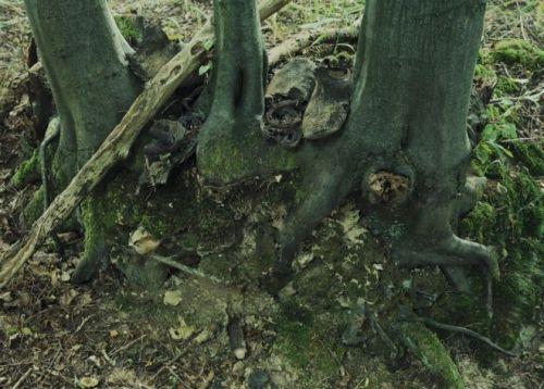 Mametz Wood Facts