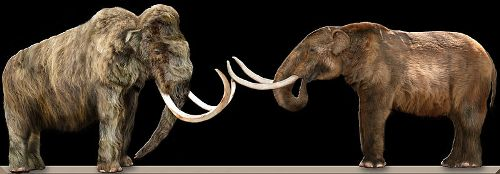 Mammoths Facts