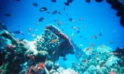 Facts about Marine Biome