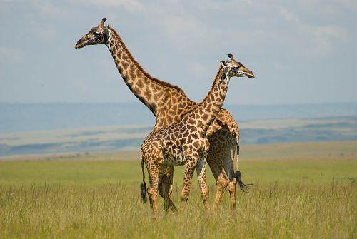 Facts about Masai Mara
