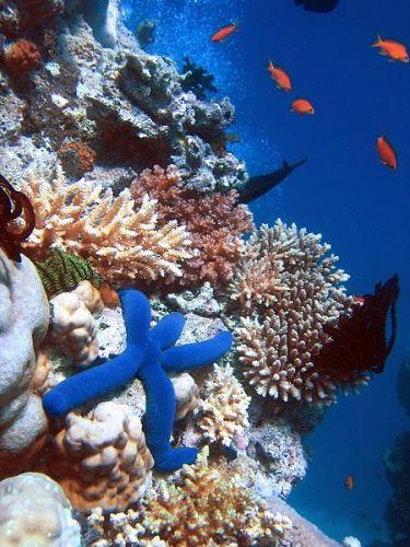 Marine Biome Facts