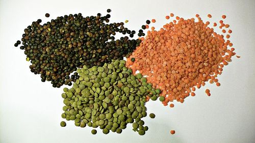 Facts about Lentils
