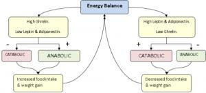 Leptin and Energy Balance