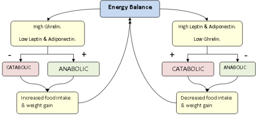 Leptin and Energy Balance