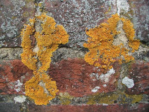 Facts about Lichen