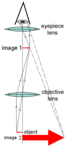 Light Microscopes Facts