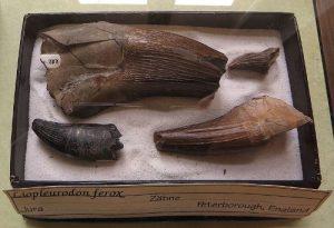 Facts about Liopleurodon