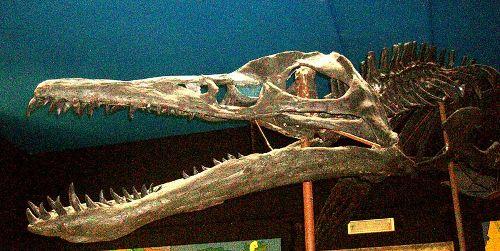 Liopleurodon Facts