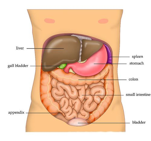 Liver Facts
