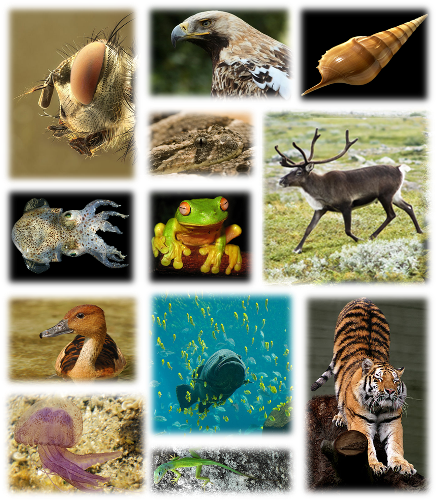 Loss of Biodiversity Facts