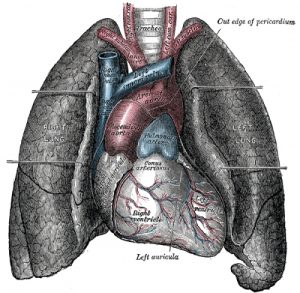 Lungs Pic