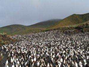 Facts about Macquarie Island