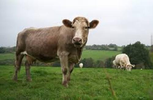 Facts about mad cow disease