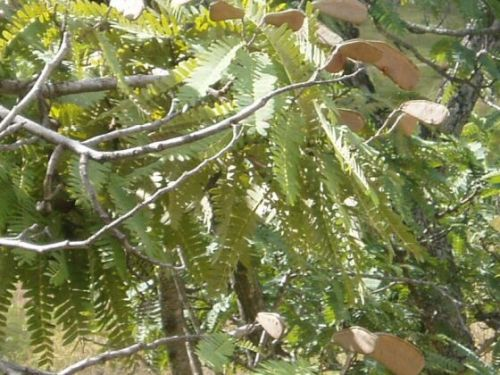 Malawi Plants