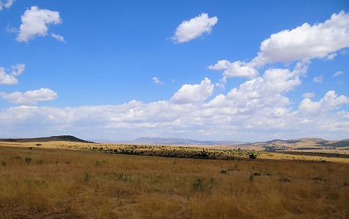 Masai Mara Image